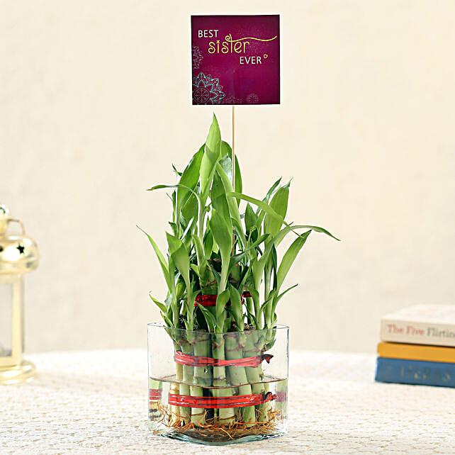 2 Layer Bamboo For Best Sister: Plants For Raksha Bandhan