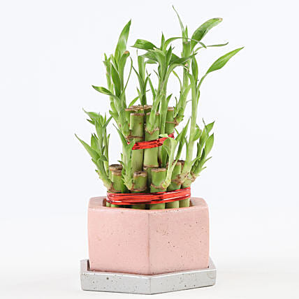 2 Layer Bamboo In Hexafun Concrete Pot With Tray: Desktop Plants