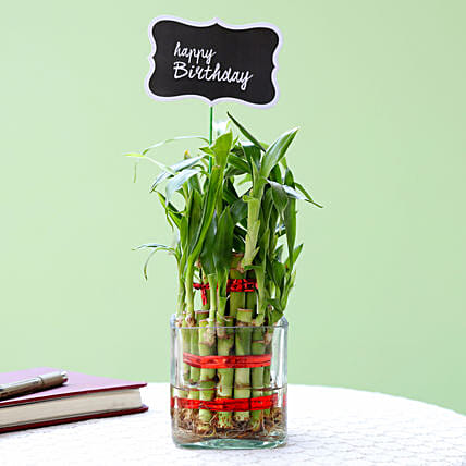 2 Layer Bamboo Plant For Happy Birthday: Plants Delivery