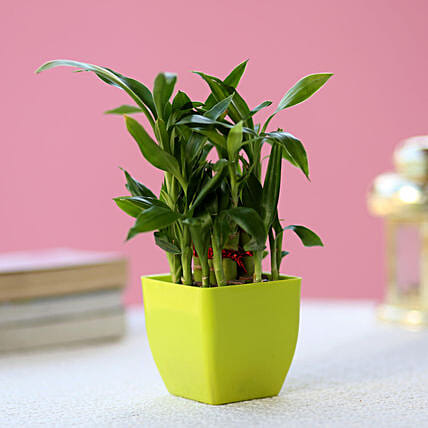 2 Layer Bamboo Plant In Green Melamine Pot: Send Good Luck Plants