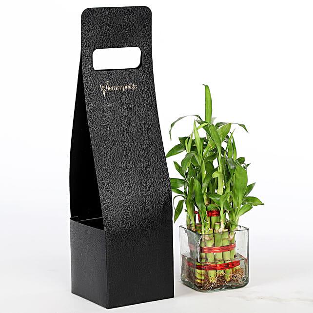 2 Layer Bamboo Plant With FNP Sleeve: Raksha Bandhan Plants