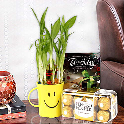 2 Layer Lucky Bamboo & Ferrero Rocher Chocolates: Buy Indoor Plants