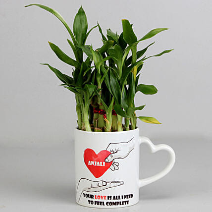 2 Layer Lucky Bamboo Plant in Heart Ceramic Mug: