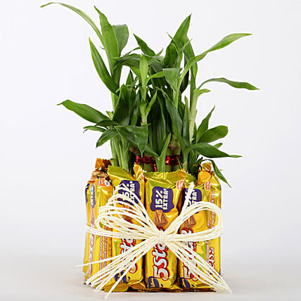 2 Layer Lucky Bamboo With 12 Chocolates: Chocolate Day Gifts