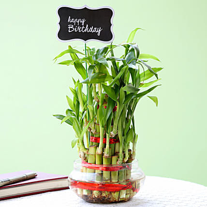 3 Layer Bamboo Plant For Happy Birthday: Buy Indoor Plants