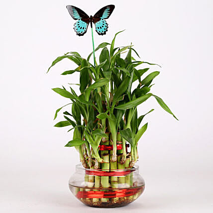 3 Layer Bamboo Plant With Butterfly: Daughters Day Plants
