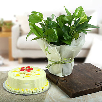 Butterscotch Cake N Lucky Money Plant: Cakes N plants