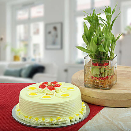 Butterscotch Cake With Bamboo Plant: Send Butterscotch Cakes