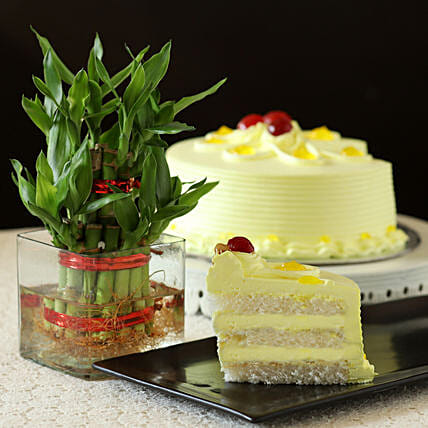 Butterscotch Cake With Bamboo Plant: Lucky Bamboo Plants