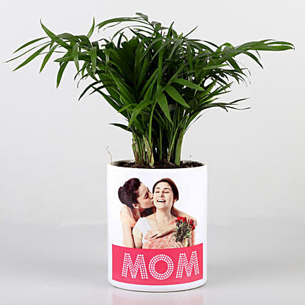 Chamaedorea Plant In Personalised Mom Pot: