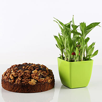 Dry Cake With 2 Layer Bamboo Combo: