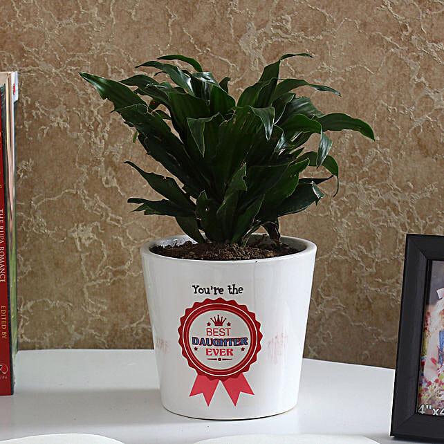 Evergreen Dracaena Compacta Plant: Cactus and Succulents Plants