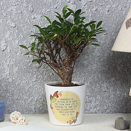 Ficus Bonsai Plant in Printed Pot: Tropical Plant Gifts
