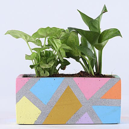 Foliage Plant Combo In Grey Concrete Pot: Money Tree