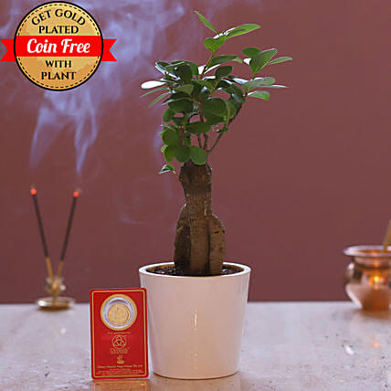 Free Gold Plated Coin With Ginseng Bonsai Plant: Rare Plants