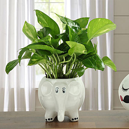 Freshen Up Money Plant: 1St Anniversary Gifts