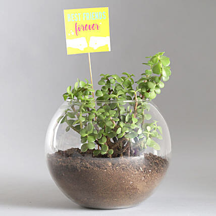 Friends Forever Jade Plant Terrarium: Good Luck Plants - Friendship Day