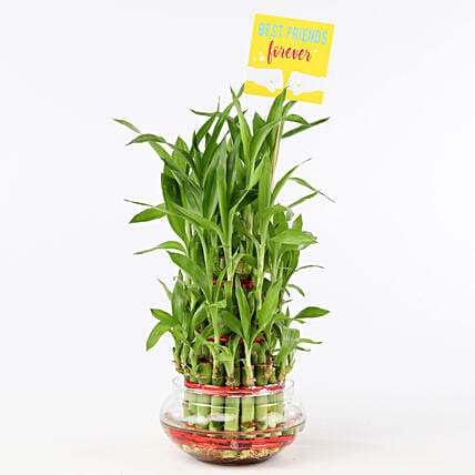 Friends Forever Three Layer Bamboo Plant: Ornamental Plant Gifts