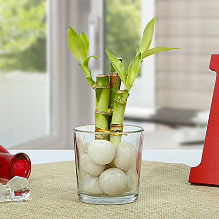 Get Lucky Bamboo Plant: Office Desk Plants