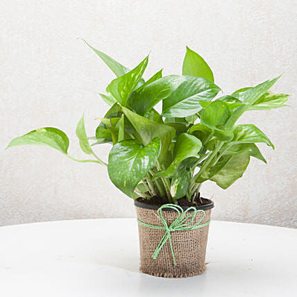 Gift Money Plant for Prosperity: Home Decor Anniversary Gifts