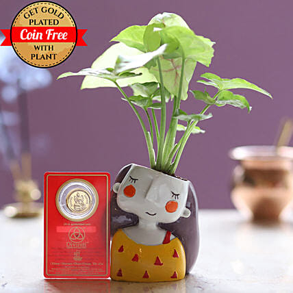 Gold Plated Coin Free With Syngonium Plant: Good Luck Plants