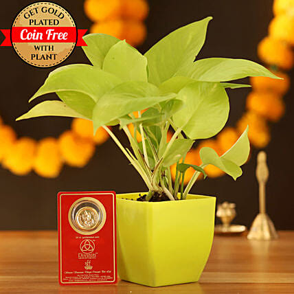 Golden Money Plant With Free Gold Plated Coin: Indoor Plants
