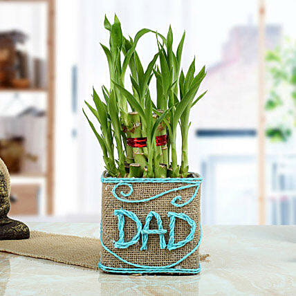 Good Luck Bamboo Plant For Dad Gifts Father