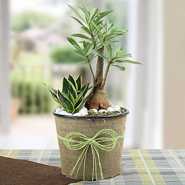 Green Home Decor Dish Garden: Flowering Plants