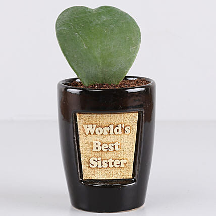 Hoya Plant For Best Sister: