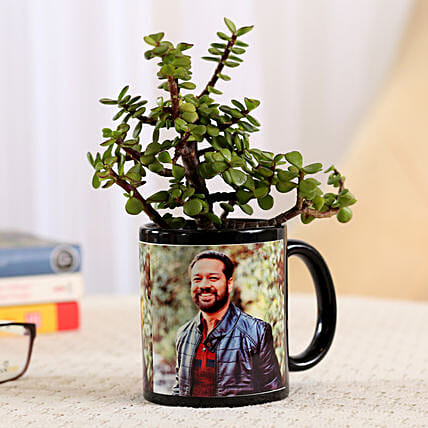 Jade Plant In Stylish Personalised Mug: Outdoor Plants