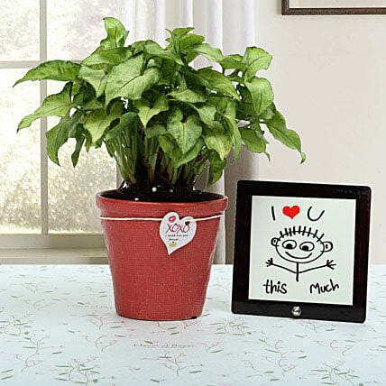Love Is Everywhere: Foliage Plants