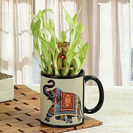 Luck In Mug: Indoor Plants
