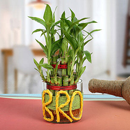 Lucky Bamboo For Brother: Brothers Day Gifts