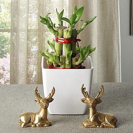 Lucky Bamboo With Deers: Exotic Plant Gifts