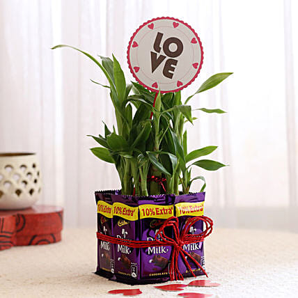 Lucky Bamboo with Love Tag & Dairy Milk Combo: Send Plants for Karwa Chauth
