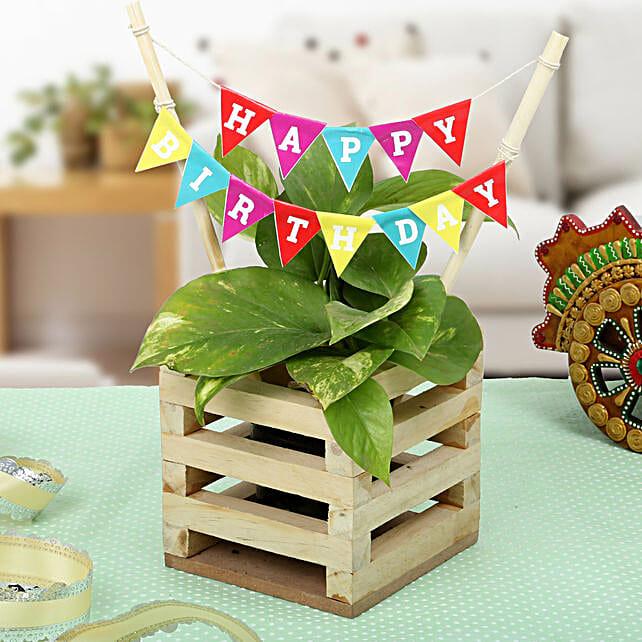 Make It Best Birthday Gift: Living Room Plants