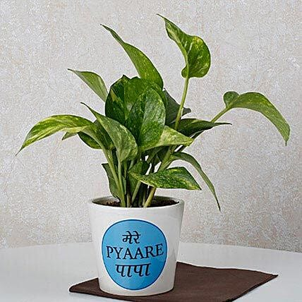 Money Plant For Dad: Money Plant