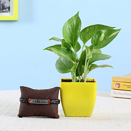 Money Plant & Friendship Band: Bonsai Plants