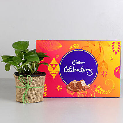 Money Plant in Black Pot with Cadbury Celebrations: Cadbury Chocolates