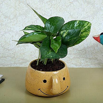Money Plant In Smiley Vase: Money Plant