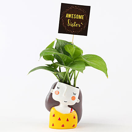 Money Plant In Yellow Pot For Sister: Air Purifying Plants