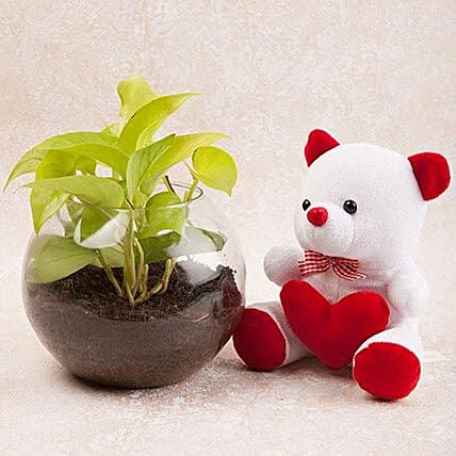 Money Plant Terrarium N Cute Teddy Combo: Send Soft Toys