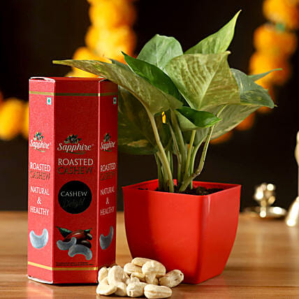 Money Plant With Roasted Cashews: Dry Fruits Gift Packs
