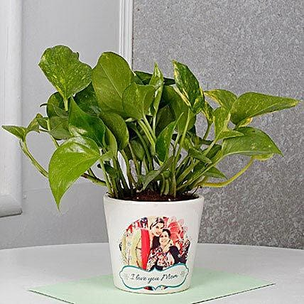 Mothers Day Special Money Plant: Money Plant