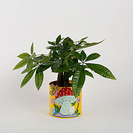 Pachira 3 in 1 Bonsai Plant in Yellow Mushroom Metal Planter: Flowering Plants For Valentine's Day