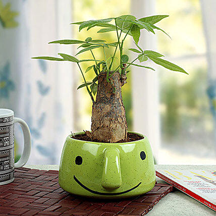 Pachira Bonsai In Smiley Vase: Spiritual Gifts