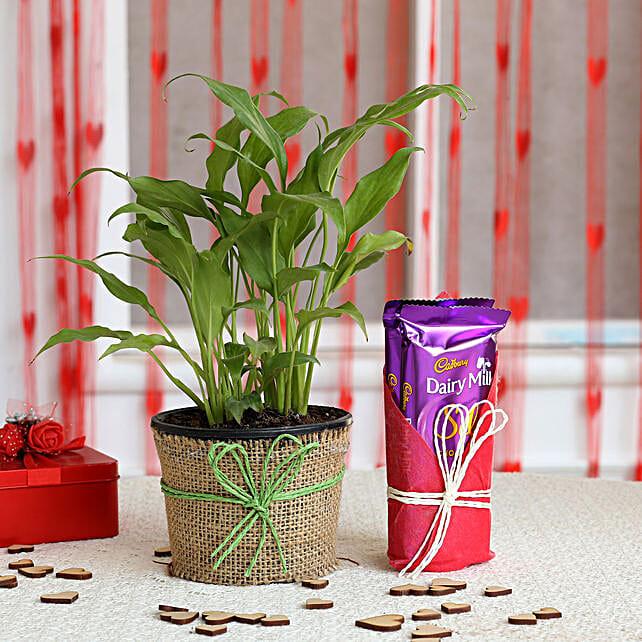 Peace Lily Plant & Dairy Milk Silk Chocolates:
