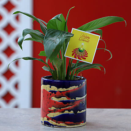 Peace Lily Plant In Pink & Blue Pot: Flowering Plants