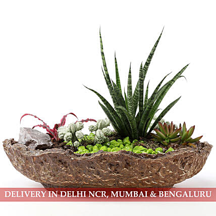 Peaceful Dish Garden: Indoor Plants