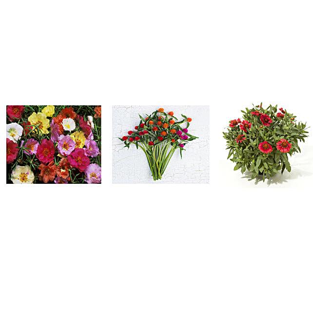 Portulaca Gomphrena & Gaillardia Seeds Combo: